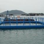 Bè nuôi hải sản trên biển
